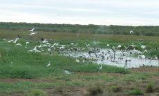 数えきれないほどの鳥達が一斉に飛び立つ瞬間は圧巻です